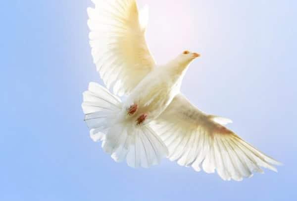 Функція Святого Духа