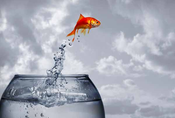 Як риба без води