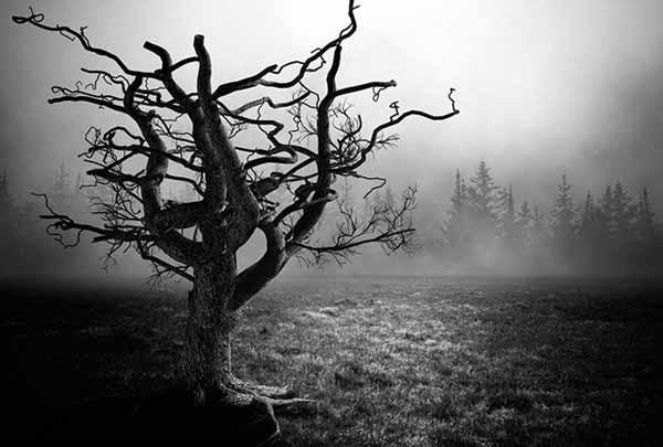 Дерево смерті