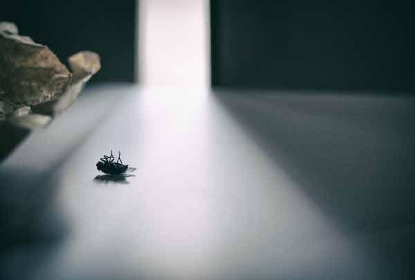 Мертва муха